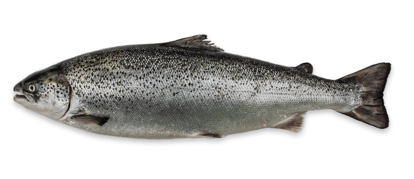 we are an independent scottish salmon business who sells premium